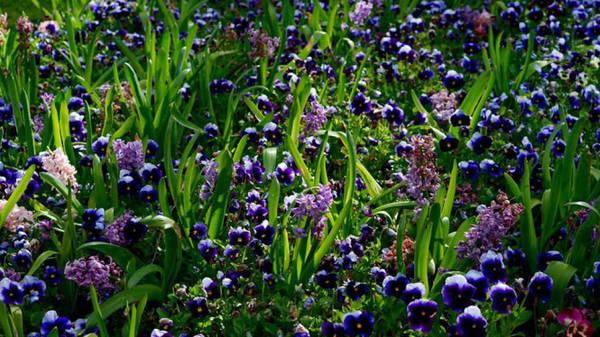 Muôn sắc hoa ở Floriade - Ảnh: N.N.Tuấn