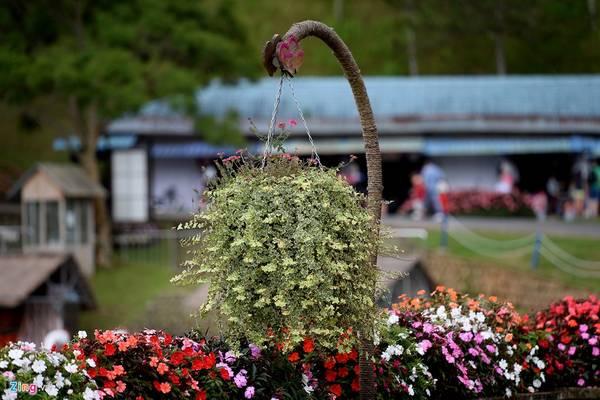 Những giỏ hoa tươi, bồn hoa trang trí khắp nơi trong thung lũng.