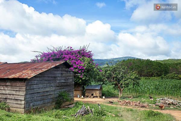 Những ngôi nhà gỗ nhỏ xinh xắn trên thảo nguyên