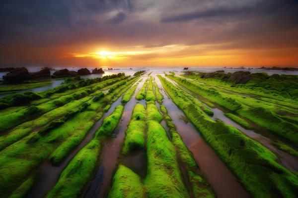 Điều đặc biệt là bãi biển này là nó sẽ biến mất lúc thủy triều lên. Nhưng khi nước rút, một bãi biển đẹp đến khó tin sẽ hiện ra với các dải đá phủ rêu xanh rì thẳng tắp.