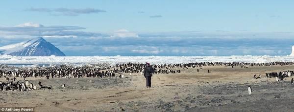 Trong những tháng mùa đông, các căn cứ dường như tách biệt với phần còn lại của thế giới, và không có chuyến bay nào đi vào đây, trừ trường hợp khẩn cấp. Trong bức hình này là Cape Bird.