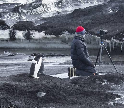 Theo Anthony, các loài động vật tại Nam Cực hoàn toàn không sợ hãi trước con người. Thậm chí chúng còn rất tò mò.