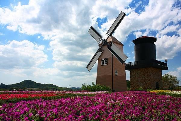 Mùa hè là thời điểm đẹp nhất của Silverlake. Đủ loại hoa khoe sắc cạnh cối xây gió giống như ở Hà Lan. Tuy nhiên mùa này hay mưa vào buổi sáng sớm và chiều tối, thời tiết ẩm ương, khó chịu.