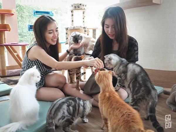 10-quan-ca-phe-thu-cung-cho-du-khach-den-bangkok-ivivu-2