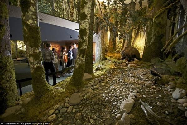 Bảo tàng Royal BC đang trưng bày khoảng 7 triệu hiện vật về lịch sử tự nhiên và lịch sử loài người