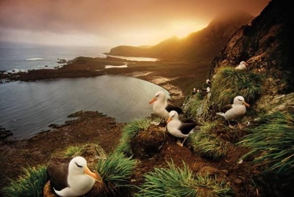 Biển Weddell ở Nam cực - Ảnh: National Geographic