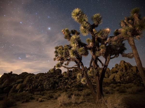 Công viên quốc gia Joshua Tree, sa mạc Mojave, bang California. Ảnh: Getty.