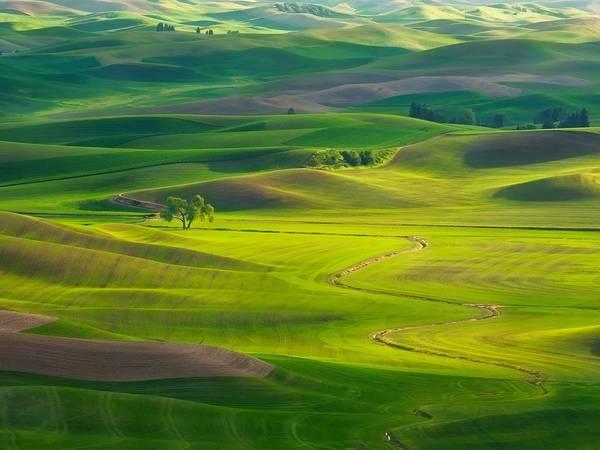 Vùng thảo nguyên The Palouse, gồm một phần miền tây nam của bang Washington, miền bắc Idaho và một phần đông bắc Oregon. Ảnh: Getty.