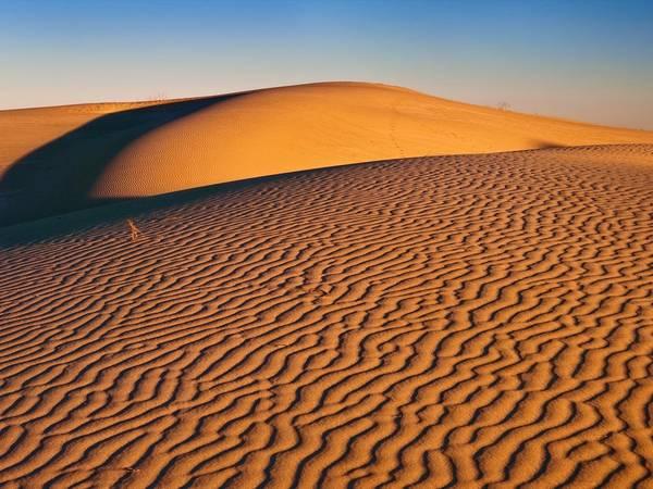 Đồi cát Monahans, Texas. Ảnh: Getty.
