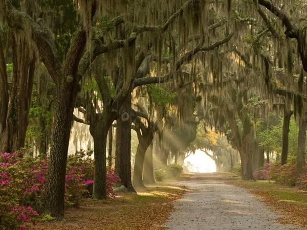 Nghĩa địa Bonaventure, Savannah, Georgia. Nơi này nổi tiếng khi được đưa vào cuốn tiểu thuyết Midnight in the Garden of Good and Evil của John Berendt năm 1994, sau đó chuyển thể thành phim do minh tinh Clint Eastwood đạo diễn. Ảnh: Alamy.