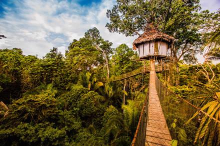 Nhà trên cây ở Peru. Ảnh: Getty.