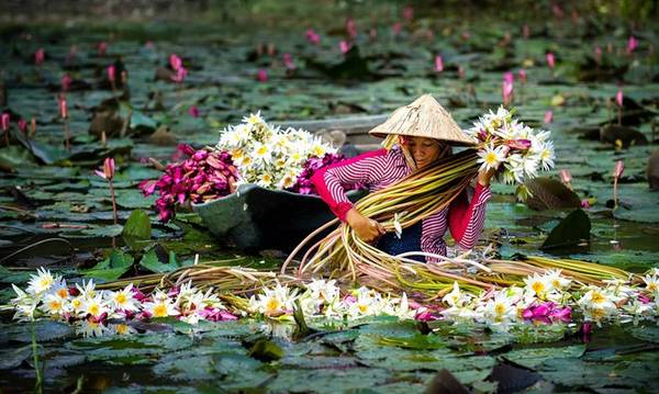 Tuy nhiên, phong cảnh An Giang mùa nước nổi lại đẹp dịu dàng với hoa súng đua nở, hoa điên điển rực một màu vàng trên mặt nước.