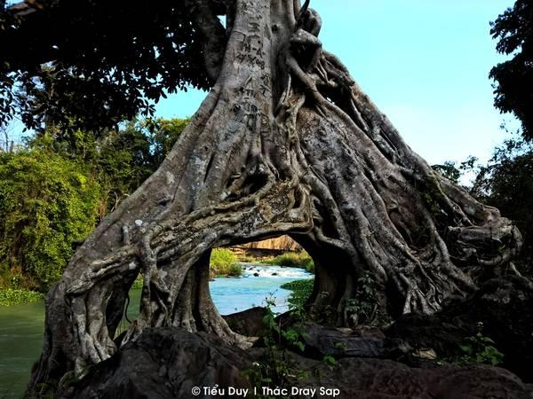 """Cạnh Dray Nur là thác Dray Sap. Vì thuộc tỉnh Dak Nông nên hiện nay muốn qua thác này phải đánh một vòng lớn dài 24km thay vì chỉ cần đi bộ một đoạn ngắn qua cầu treo như trước kia. Theo tiếng Êđê, Dray Sap có nghĩa là """"thác khói"""", bởi lẽ dòng nước từ trên cao đổ xuống thung lũng tạo thành một khối lớn bụi nước bay là như màu sương khói. Con đường đi bộ vào thác Dray Sap có nhiều cảnh đẹp và lạ, mang nét đặc trưng của núi rừng Tây Nguyên."""