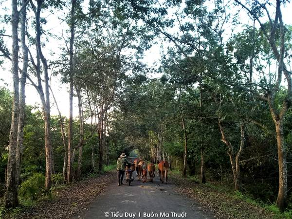 Từ Dray Sap, bạn đi theo con đường độc đạo khoảng 6km để vào thác Gia Long và hồ Tắm Tiên. Đoạn đường tuy ngắn nhưng được trải nhựa, hai hàng cây phủ bóng xanh mát, lâu lâu bạn sẽ bắt gặp được những đàn bò lững thững trên đường.
