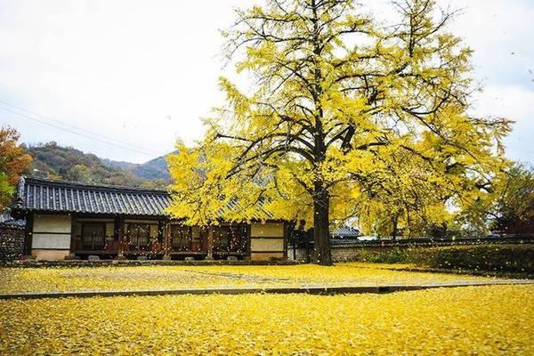 Lá cây phủ kín sân nhà khi những trận gió cuối mùa thu tràn tới.