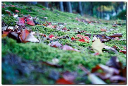 Mùa lá rụng trong vườn