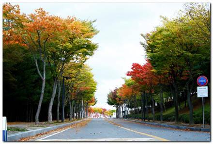 Ai có thể đi qua những con đường đẹp đến nhường này.