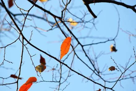 Những chiếc lá cuối cùng sẽ rời cảnh trong vài ngày tới, nhương chỗ cho mùa đông lạnh giá.