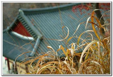 Mùa của cỏ úa