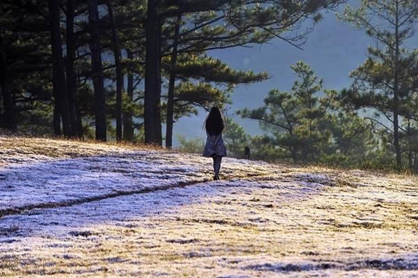 Hành trình khám phá đồi cỏ hồng thường bắt đầu từ chiều hôm trước đến sáng hôm sau, không đầy 24h. Bạn di chuyển từ trung tâm Đà Lạt đến Thung Lũng Vàng khoảng 14 km, sau đó chạy xe máy thẳng vào đồi hoặc có thể đi bộ thưởng ngoạn cảnh.