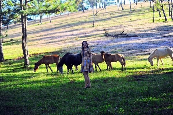 Đây là khu vực hoang sơ, yên bình với những vạt cỏ miên man, hàng thông xanh rì. Nếu may mắn bạn có thể bắt gặp đàn ngựa đang gặm cỏ.
