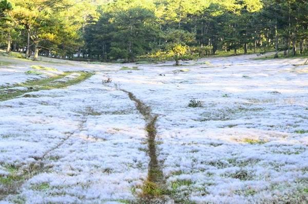 Sáng thức dậy, bạn sẽ thấy đồi cỏ hồng biến thành đồi cỏ tuyết do sương trắng xóa đọng lại.