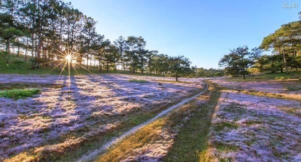 Một lúc sau, mặt trời lên, sương tan, cảnh vật hiện ra lại là đồi cỏ hồng rực rỡ. Sau khi ngắm cảnh, chụp ảnh, du khách dọn dẹp lều trại, trở về trung tâm. Chuyến đi không đầy 24h nhưng mang đến cảm nhận về một Đà Lạt đẹp hơn ở mùa cỏ hồng. Để tham gia hành trình, bạn có thể tự đi hoặc đặt tour khám phá Đà Lạt có sự hỗ trợ về di chuyển, lều, lửa trại, đồ ăn… với giá khoảng 600.000 đồng một người.