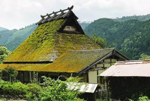 Rêu phong trên mái lá