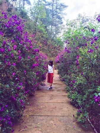 Những con đường ngập tràn hoa sim tím sẽ khiến các bạn nao lòng.
