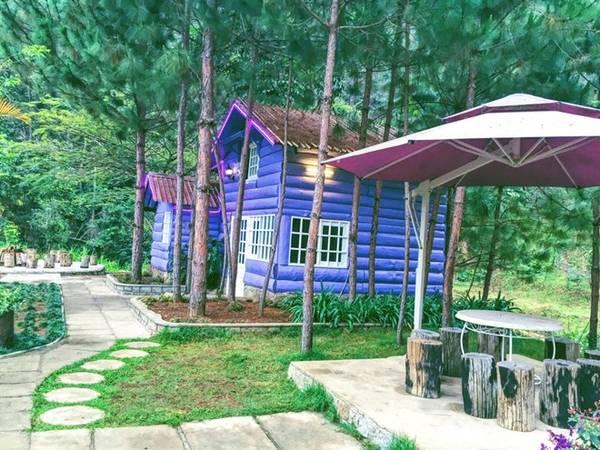 Vẻ mộng mị của những căn nhà tím giữa rừng thông, nơi có thể hiện thực hóa những giấc mơ hưởng thụ cuộc sống thật sự thư giãn.