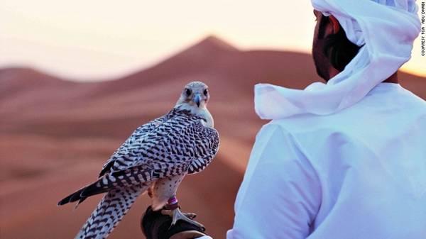 Tộc người du mục Bedouin ở Abu Dhabi có truyền thống thuần hóa chim ưng. Abu Dhabi có bảo tàng và bệnh viện chim ưng lớn và hiện đại nhất thế giới.