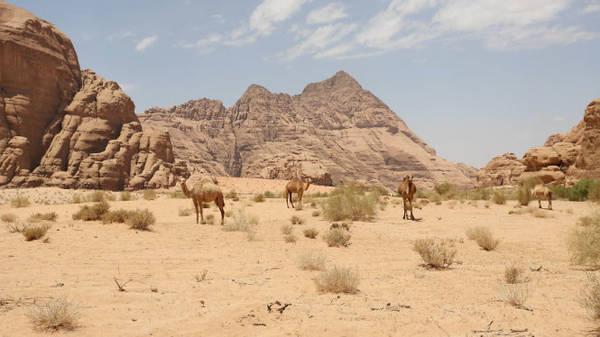 Sa mạc Wadi Rum, Jordan