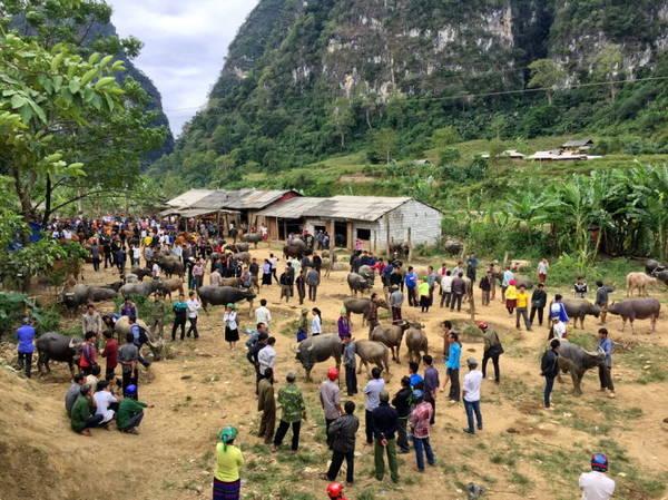 Chợ trâu Pắc Miầu - Ảnh: Giang Nguyên