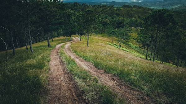 Ven đường mòn là rừng thông xanh mướt, do mình đi vội vì trời sắp mưa nên không chụp được nhiều ở đoạn đường cực khổ này.