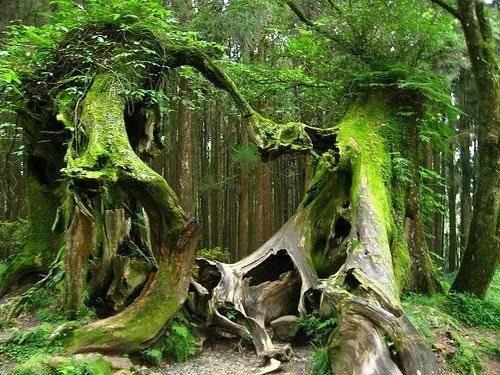 Một kiến tạo thiên nhiên độc đáo trong rừng mưa Hoh - Ảnh: pinterest