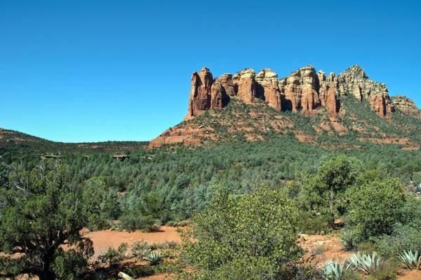 Rừng Coconino ở Arizona - Ảnh: fotolia