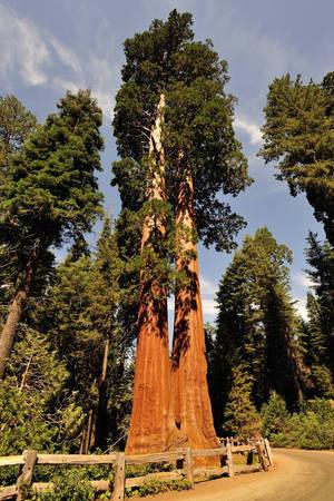 Công viên quốc gia Sequoia - Ảnh: goodfreephotos