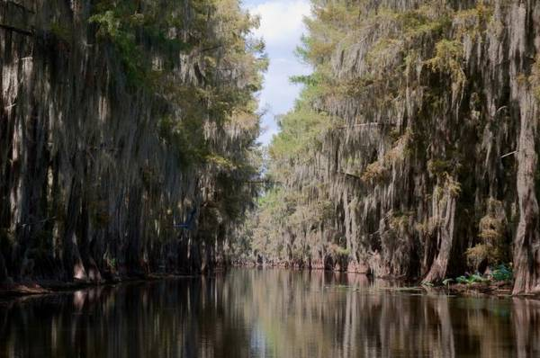 Rừng ở hồ Caddo tại bang Texas - Ảnh: flickr