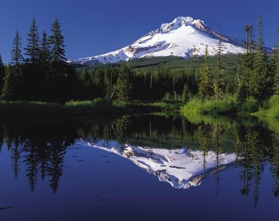 Rừng quốc gia ở núi Hood phản chiếu trong hồ Gương - Ảnh: wiki