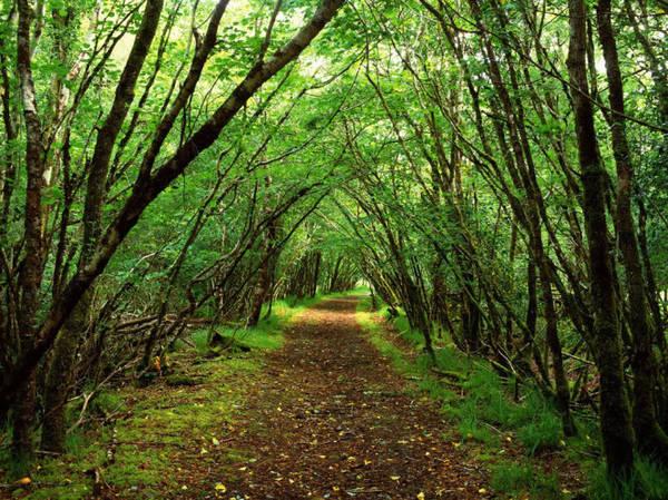 Một con đường cắt rừng quốc gia núi Hood - Ảnh: 3datadesign.com