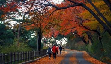 Con đường tuyệt đẹp dẫn lên tháp Namsan. Ảnh: Havehalalwilltravel.com