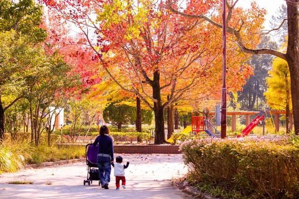Ở Nhật các loài cây đặc trưng như anh đào hay phong được trồng nhiều ở hai bên đường và công viên. Những ngày cuối tuần công viên luôn là điểm đến ngắm lá đỏ yêu thích của người Nhật.
