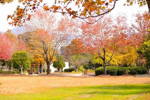 Đến Nhật ở bất kỳ đâu du khách cũng dễ dàng thu vào tầm mắt những hàng cây lá đỏ. Với hơn 70% là rừng nguyên sinh nên đây là một trong những đất nước có khí hậu trong lành nhất. Những ngôi chùa cổ kính, công viên rừng kết hợp là điểm đến mà du khách nên lựa chọn để tham quan vào mùa thu.