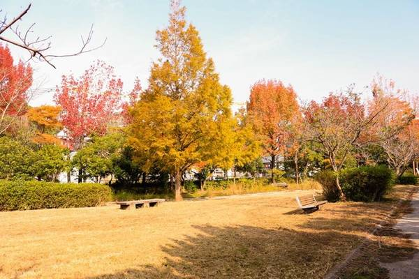 Du khách có thể tận hưởng mùa thu theo cách riêng như nhấm nháp ly cà phê nóng dưới ánh nắng vàng ấm trên chiếc ghế gỗ mộc mạc, cùng quyển sách thú vị trên tay và phía trước mặt là những hàng phong rũ lá đỏ nhẹ bay.