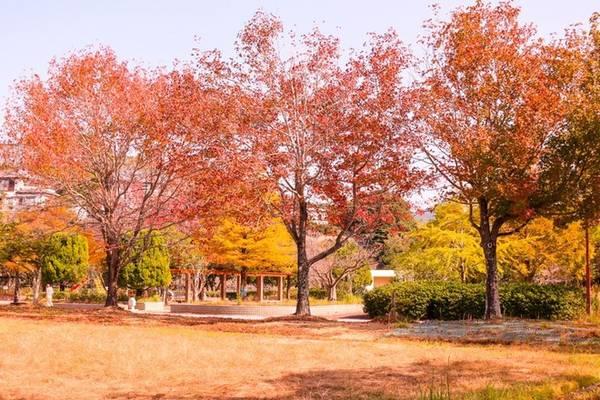 Thiên nhiên Nhật Bản vào thu như khoác lên tấm choàng đỏ rực.
