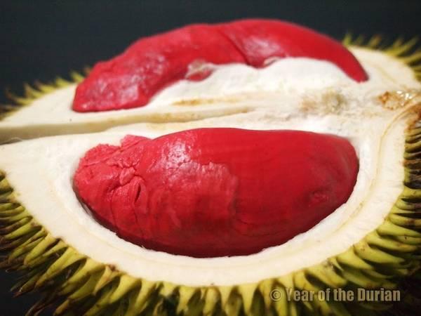 """Sầu riêng được mệnh danh là """"Vua của các loại trái cây"""" ở Malaysia với vị thơm ngon hơn hẳn các nước khác. Tuy nhiên do khá """"nặng mùi"""" nên nó thường bị cấm tại các khách sạn lớn. Ngoài ra, Malaysia còn sở hữu sầu riêng ruột đỏ đặc trưng hiếm thấy (Udang Merah). Ảnh: Year of the durian."""