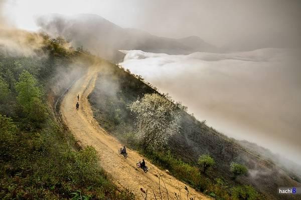 Ngải Thầu là một xã vùng cao nằm giáp biên giới phía bắc của huyện Bát Xát. Nơi đây khí hậu ôn đới, quanh năm mây mù bao phủ tạo thành khung cảnh huyền ảo. Thời điểm ngắm mây thích hợp nhất là từ tháng 11 tới tháng 4 năm sau, ngoài ra du khách có thể kết hợp các chặng trekking, leo núi hay chạy xe máy phiêu du. Ảnh: Hachi8.