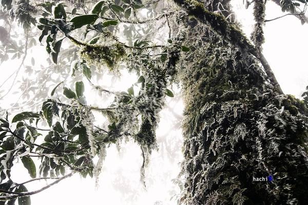 Nhìu Cồ San là một khối núi có địa hình phức tạp nổi tiếng của khu vực. Trong những đợt gió mùa lạnh giá, Nhìu Cồ San thường chìm trong băng giá. Leo núi vào mùa lạnh thì hành trình vượt rừng của bạn sẽ rất khó khăn, tuy nhiên phong cảnh thiên nhiên luôn làm con người ngạc nhiên. Ảnh: Hachi8.