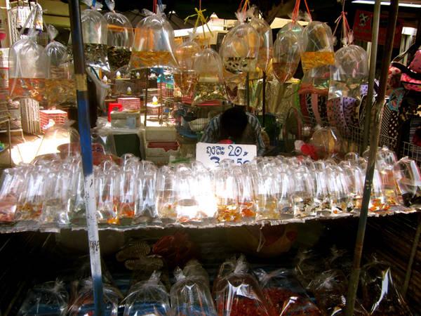 Chợ cá Chatuchak là điểm đến yêu thích của một số lượng lớn người Thái chơi cá, nhiều người rất giàu có và sẵn lòng tiêu xài cho những con vật cưng của mình. Ảnh: The World and His Tuk Tuk.