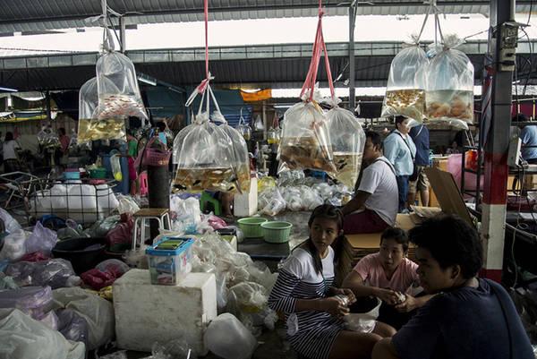 Khu chợ dẫn vào cả những lối đi hẹp hay ngõ cụt. Cá ở đây thường được đóng túi để bán nhanh, ngoài ra thương nhân cũng bán buôn. Ảnh: Mike Tuccinardi.